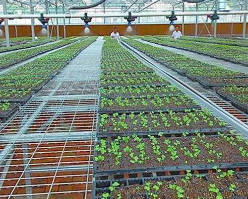PE灌溉管案例